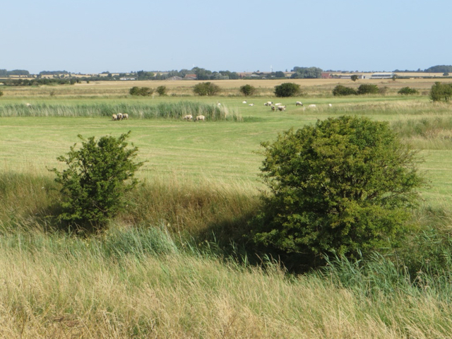 Grazing land near Skeffling