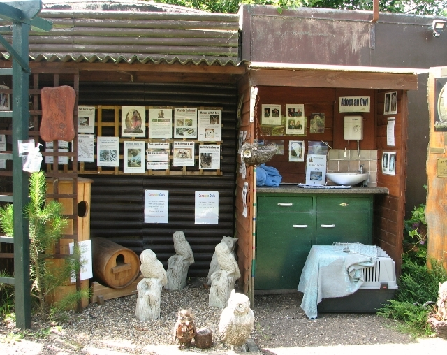 Lots of information at the Fritton Owl Sanctuary