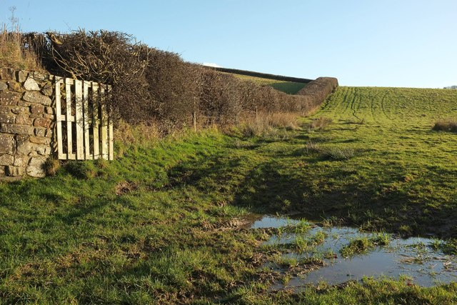 Field boundary near Deptford