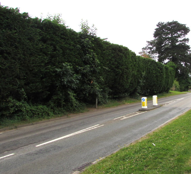 Long high hedge, Pillmawr Road, Malpas, Newport