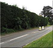 ST3090 : Long high hedge, Pillmawr Road, Malpas, Newport by Jaggery
