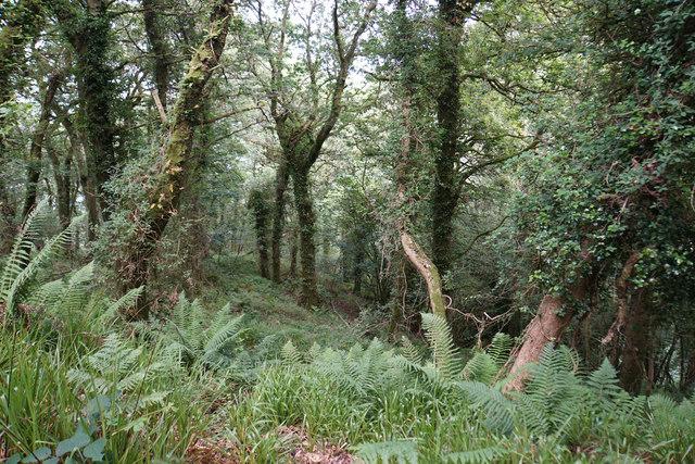 Woodland above Woody Bay
