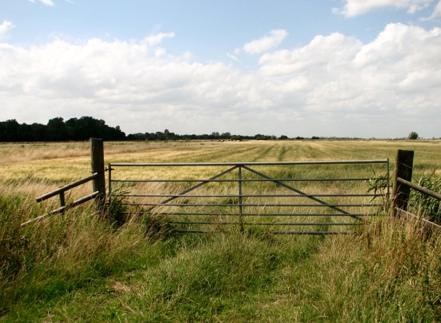 Ripening barley in the Norton Marshes
