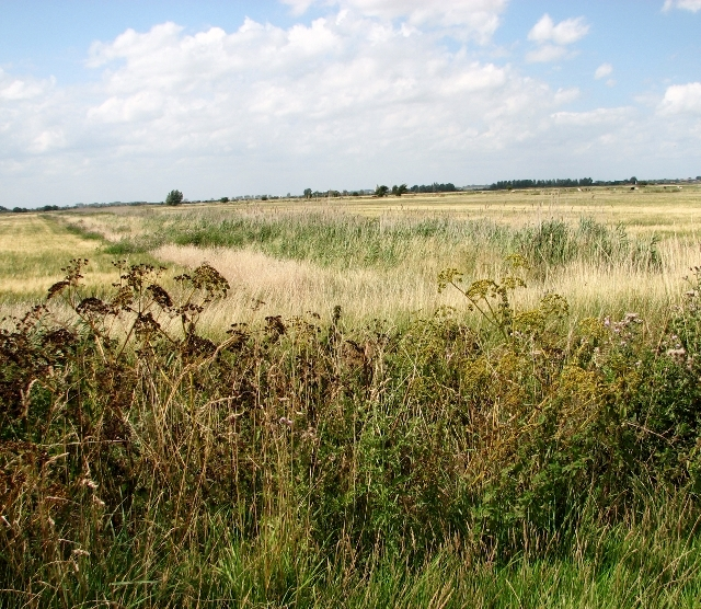 Crop fields in the Norton Marshes