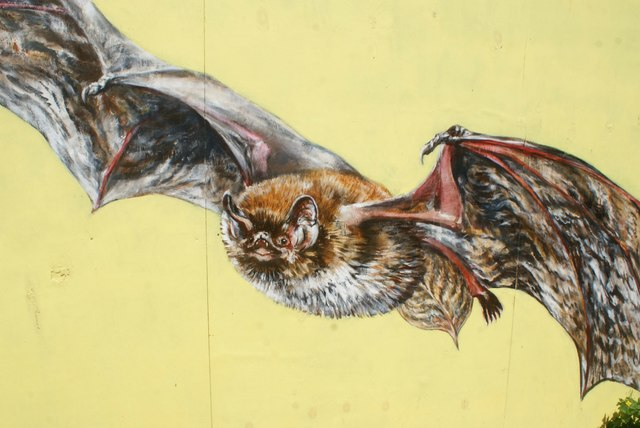 View of a bat mural in Camley Street Nature Reserve