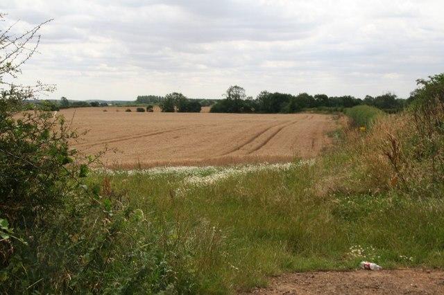 Crop field off Buckminster Road