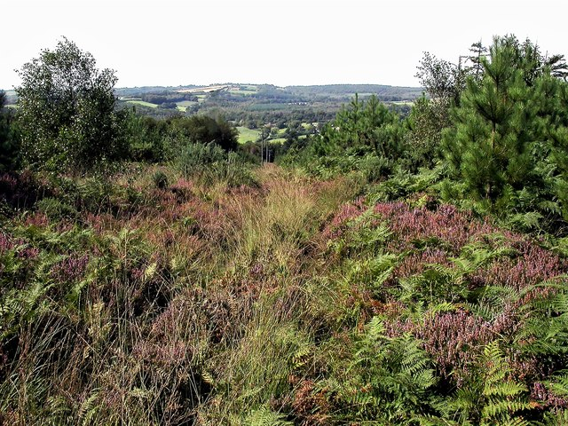 View west from Darwell Wood, Netherfield