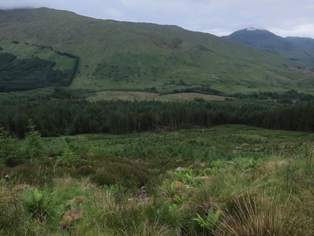 Forestry plantations in Glen Creran