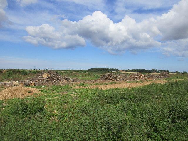 The remains of Oak Cottage Plantation