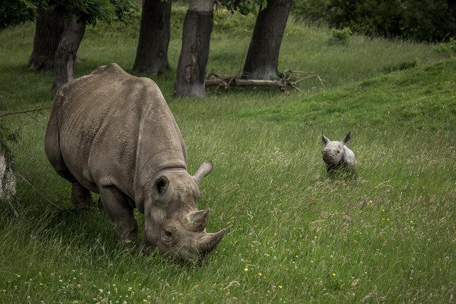 Chester Zoo, Rhino Enclosure
