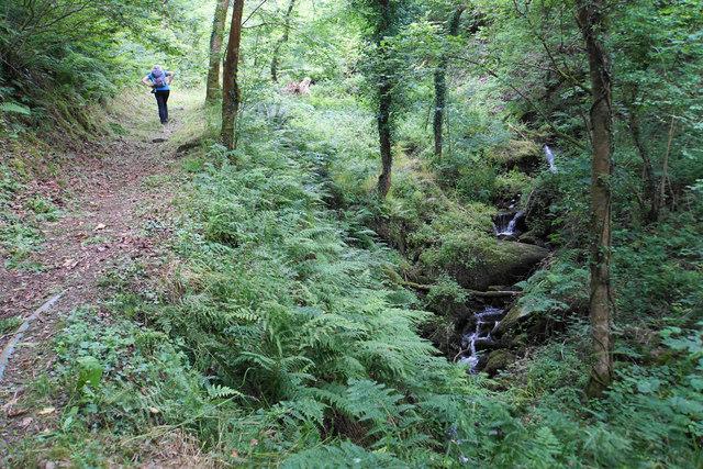 Path in Caffyns Heanton Wood