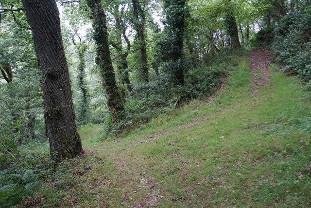 Tracks in Caffyns Heanton Wood