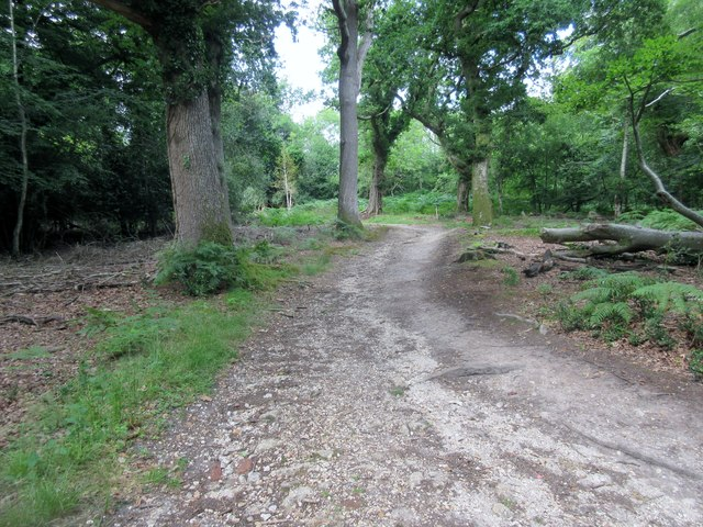 Track through Connigers Copse