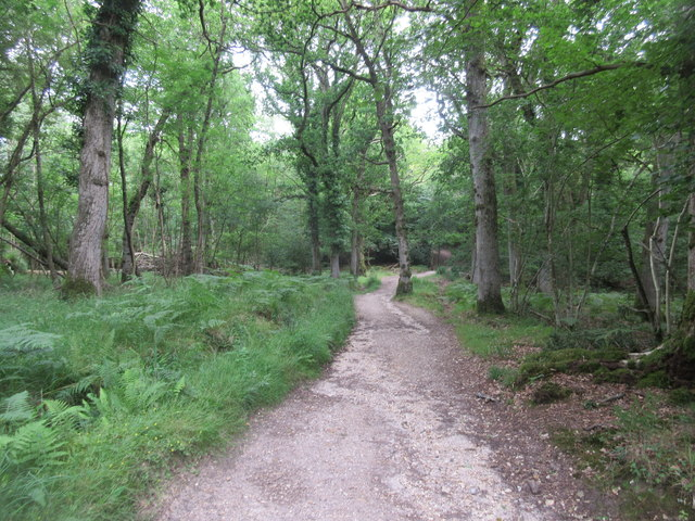 Bridleway to Roydon Manor