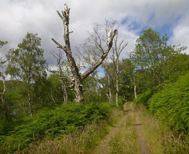 Track through woodland, by Loch Garve