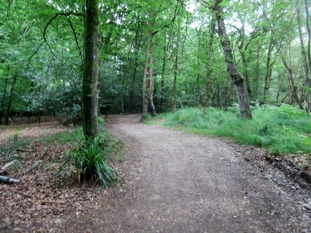 Bridleway approaching Pinhorns Rough