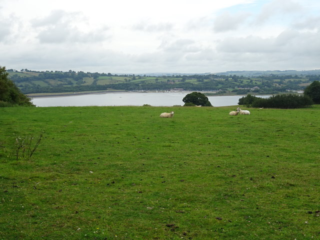 Sheep pasture above Carsington Water
