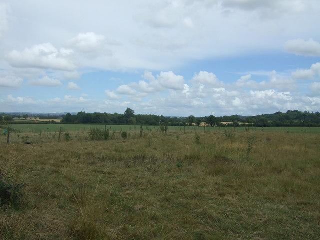 Grazing near Westfields Farm