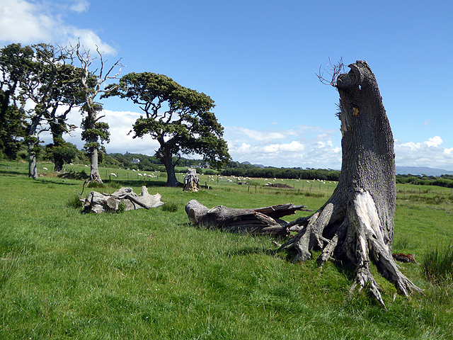 A shattered tree on Aberkin Farm