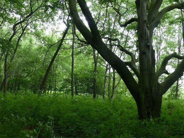 Manchester Wood