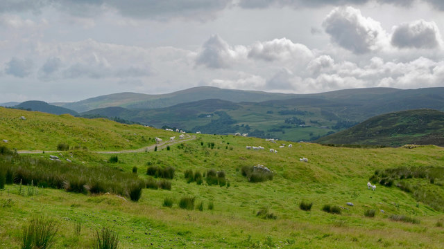Sheep country, Lettie Valley, Rogart