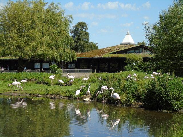 The flamingo house