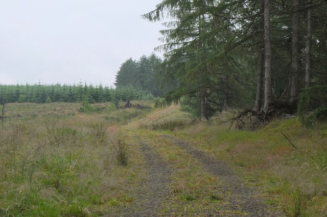 Track in Grassfield Forest