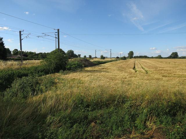 Barley by the railway