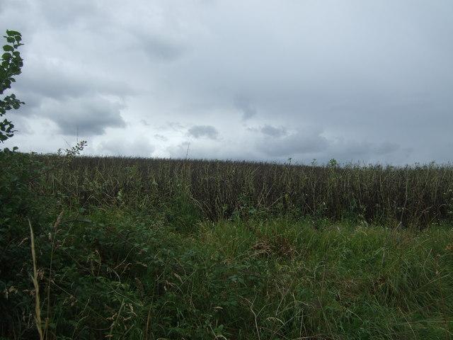 Crop field off School Road