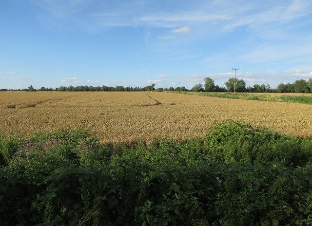 Field by Cross Drove