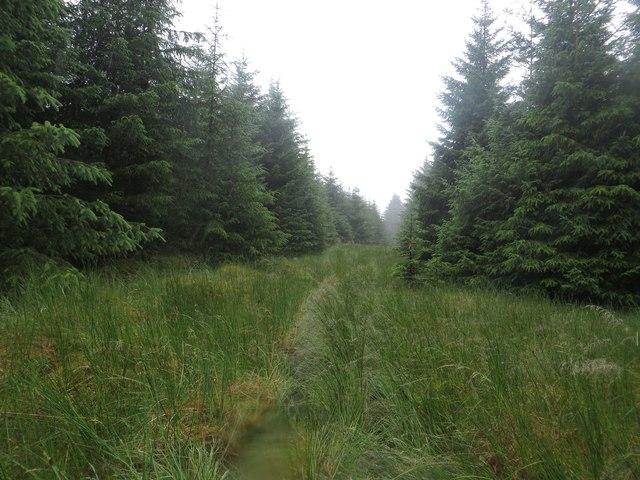 Break between blocks of trees, Wark Forest