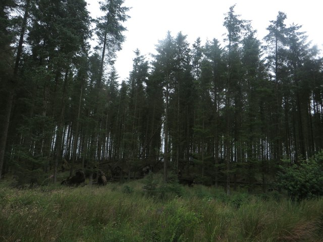 Mature trees above Yarrowmoor
