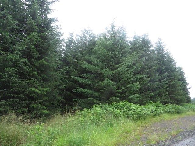 Trees above Yarrowmoor