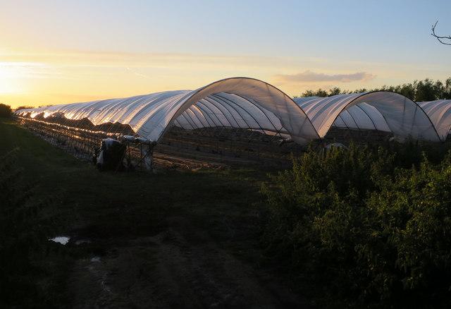 Polytunnels at Sunclose Farm