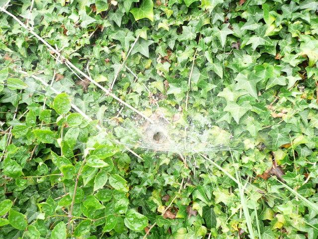 Spider's Lair, Folly Lane. Slad