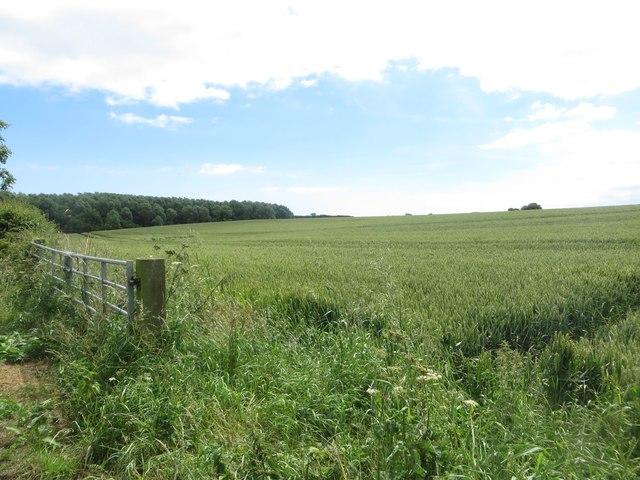 Arable field at Brigg Bottom