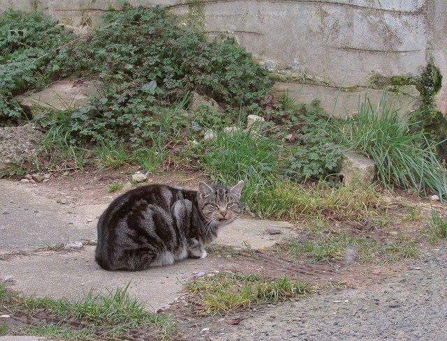 Cat near Hill Park Road, Torquay