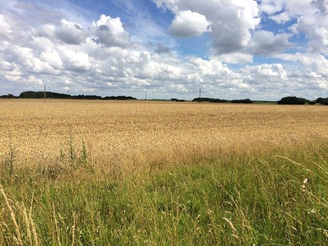 Farmland at Sandall Long Common