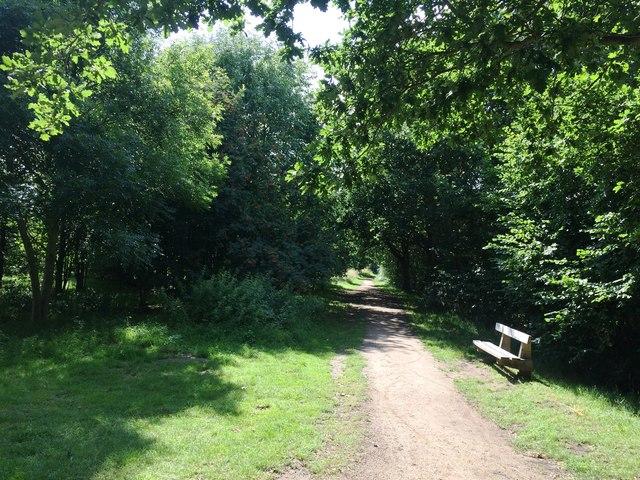Woodland Bridleway in Quarry Park