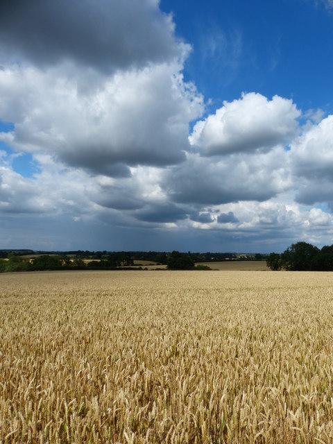 Farmland north of Covert Lane