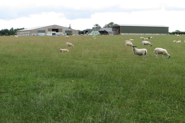 Manor View Farm and some sheep