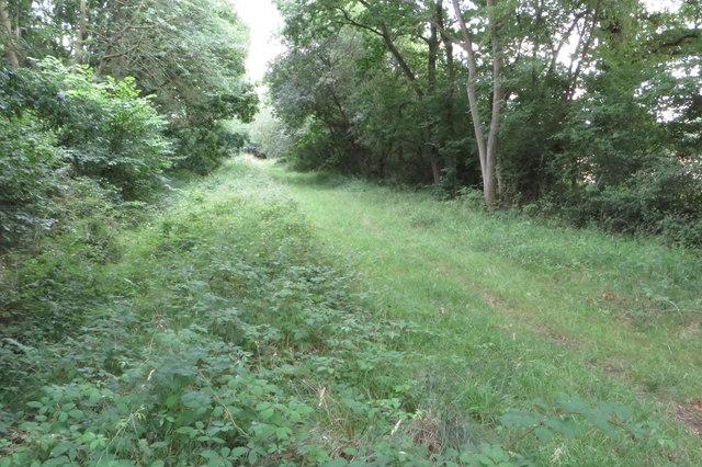 Bridleway by Shortgrove Wood