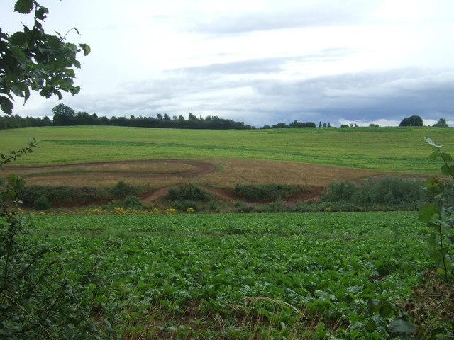 Crop field south of Old Burcot Lane