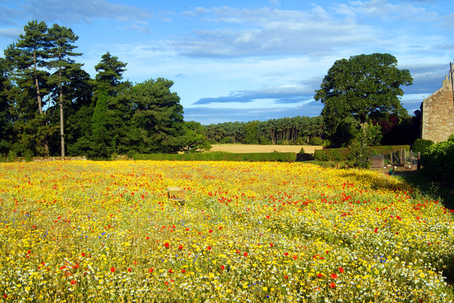 Wild flowers at St Ford