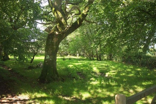 Field on Storridge Moor