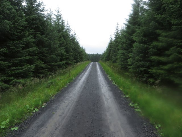 Forest track east of Byreshield Hill