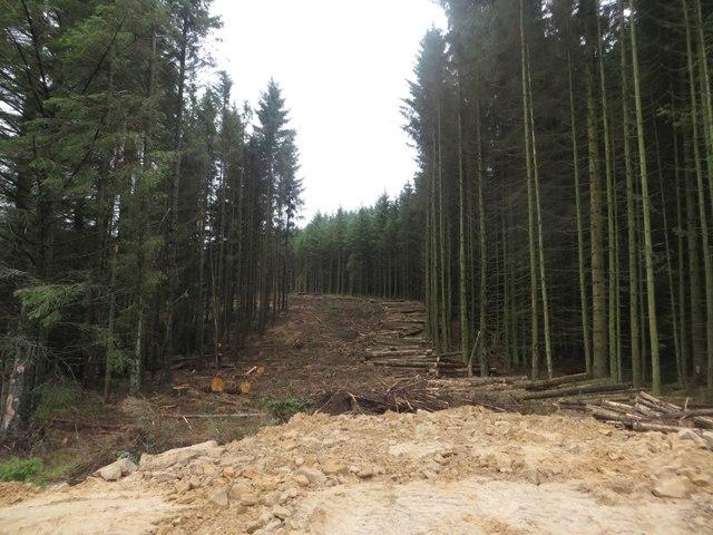 Clear felling, Kielder Forest