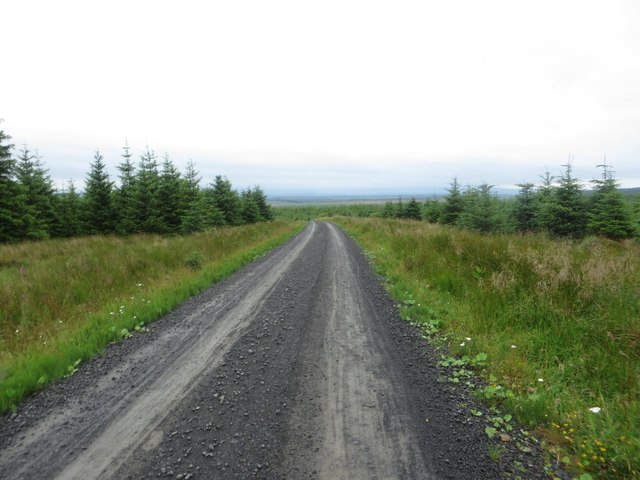 Forest track near Whickhope Nick