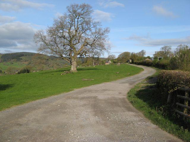 Lane to Llan Farm
