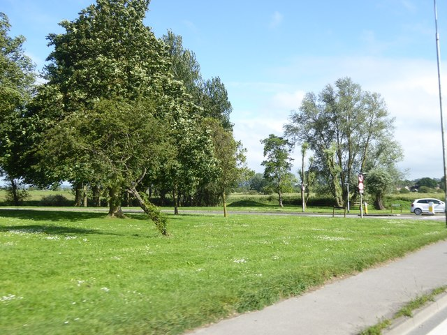 Grass and trees by Street Road, Glastonbury